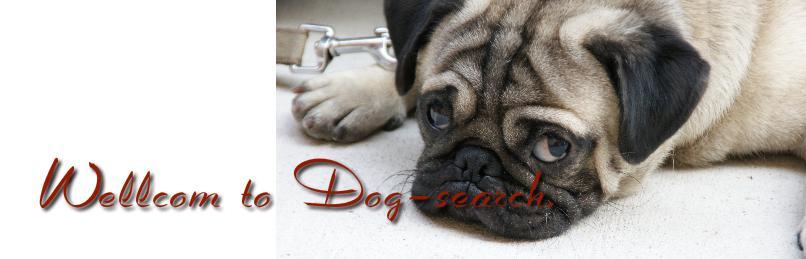 パグ専門【Dog-search】